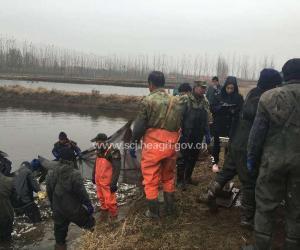 河北省2015年渔业增殖放流监督工作全面完成