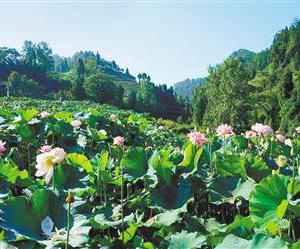 水利部定点扶贫重庆4区县 破解贫困地区水之困