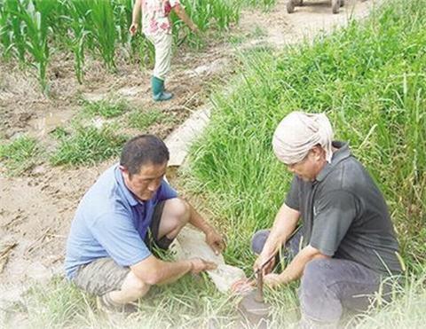 """河北省衡水市率先推出""""一提一补""""农业用水机制—"""