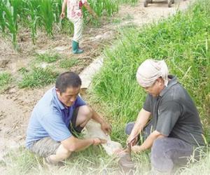 """河北省衡水市率先推出""""一提一补""""农业用水机制——村里人浇地,先算""""节水账"""""""