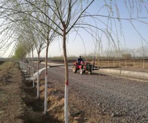 """十一泵站:让树木""""喝""""上春水"""