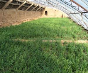 灌溉试验站:抓住季节做好蔬菜种植