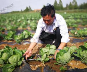 节水灌溉,种植业可持续发展的甘露