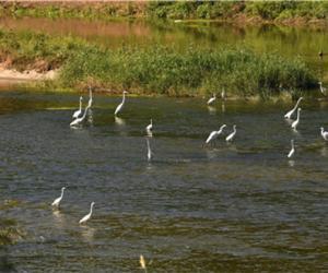 北京:温榆河将成为候鸟的家园