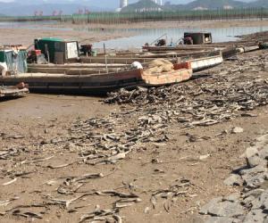 《宁波市近岸海域海面漂浮垃圾监管处置管理实施方案》完成初稿