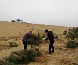 市水政监察支队沿河栽种松树